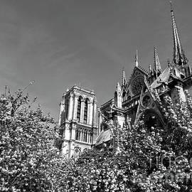Alex Cassels - Notre Dame in Springtime