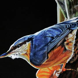 Lillian  Bell - Nuthatch