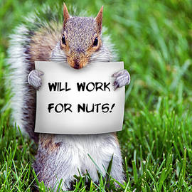 Nutty Squirrel by Brian Wallace