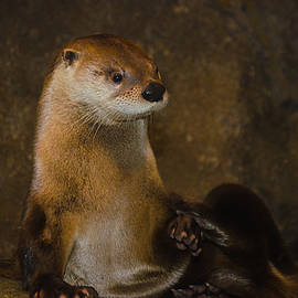 New York River Otter by Linda  Howes