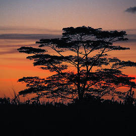 Oahu Upcountry Sunsets by Megan Martens