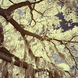 Oak and Moss by Cathy Franklin