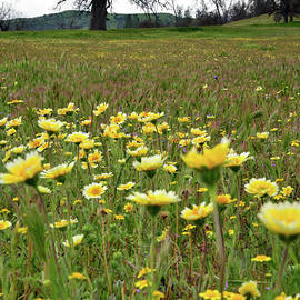 Kathy Yates - Oak and Wildflowers at Shell Creek
