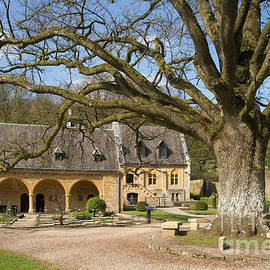 Philippe Boite - Oak at Orval Abbey