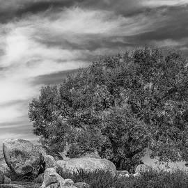 Joseph Smith - Oak, Boulders and Clouds