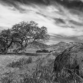 Joseph Smith - Oak, Meadow, Boulder