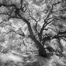 Alexander Kunz - Oak Shaded Trail
