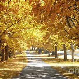 Oak tree avenue in Autumn - Jane Rix