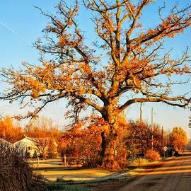 9016 - Oak Tree On Oak Road by Sheryl L Sutter