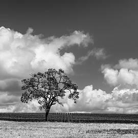 Joseph Smith - Oak with Cloudbank