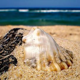 Ocean beyond a Shell