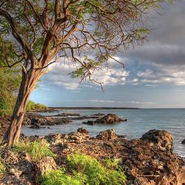 Bryan Keil - Ocean Tree
