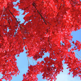 Fire in the Sky - October in the Valley - Autumn Photographye Sky by Brooks Garten Hauschild
