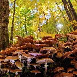 October mushroom by Mircea Costina Photography