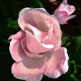 Stephanie Moore - October Rose 2