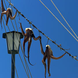 Octopus Out to Dry