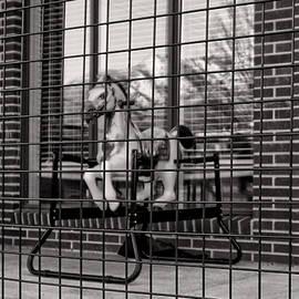 Ogden Rocking Horse by Ely Arsha