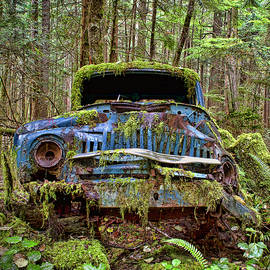 Peggy Collins - Old Blue Truck in Forest