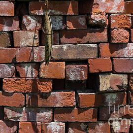 Jennifer White - Old Bricks Abstract