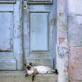 Carlos Caetano - Old Door With Cat