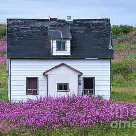 Les Palenik - Old farmhouse in a field with fireweed flowers