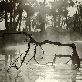 Old Florida River Scenery by Stefan Mazzola