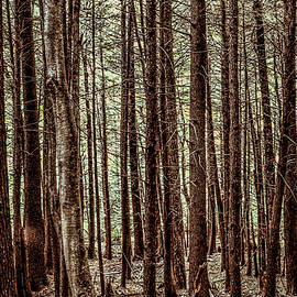 Shelley Smith - Old Growth