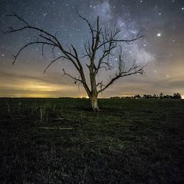 Old Tree  - Aaron J Groen