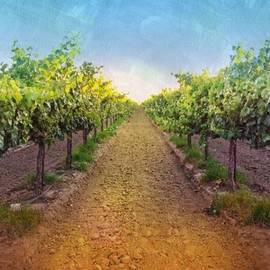 Old #vineyard Photo I Rescued From My