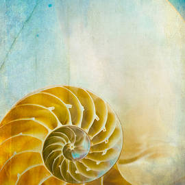 Old World Treasures - Nautilus by Colleen Kammerer