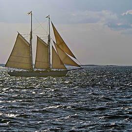 On All Sails by Lyuba Filatova
