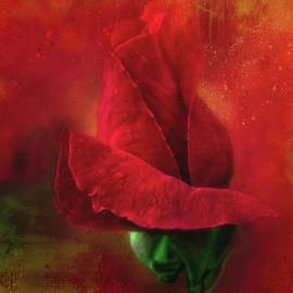 HH Photography of Florida - On Fire - Red Red Rose