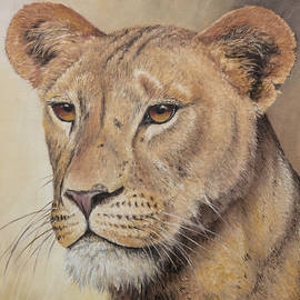 On-guard - Lioness by Christopher Cox