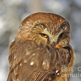 Little Wise Owl by Rick  Monyahan