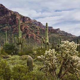 On The Arizona Border  by Saija  Lehtonen