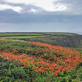 On The Cornwall Coast by Andrew Wilson
