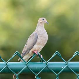 On The Fence by Rick Kuperberg Sr