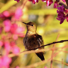 On the Redbud Tree by Debby Pueschel