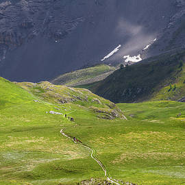 Paul MAURICE - On the trail - French Alps