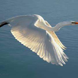 On Wings of Splendor by Brian Tada