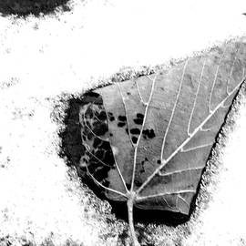 Curtis Tilleraas - One Leaf on a Snowy Deck