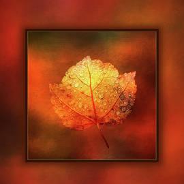 Terry Davis - One Leaf