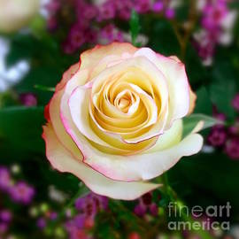 Wonju Hulse - One rose