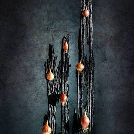 David Davenport - Onions on old wood