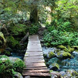 Michelle Williamson - Opal Forest Splendor