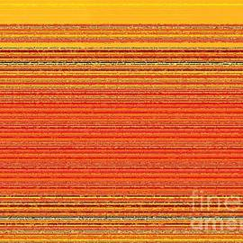 Zenya Zenyaris - Orange and golden shades stripes on a decorative texturized pattern.