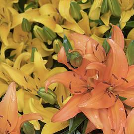 Orange and Lemon Lilies Flora Lyrical 5.23.17