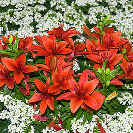 Orange and White by Sally Weigand