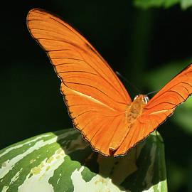 Julie Weber - Orange Beauty -