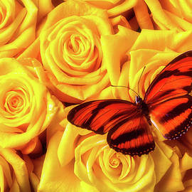 Orange Black Butterfly On Yellow Roses - Garry Gay
